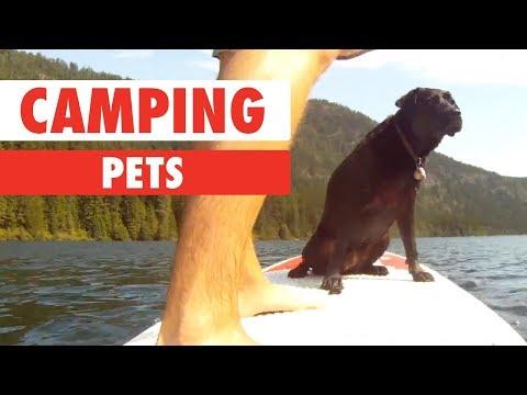 Camping Pets