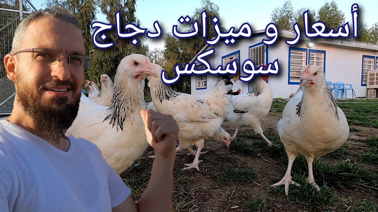 كفائة الطاقة الشمسية في الايام الغائمة ، اسعار وميزات الدجاج الجديد ، تطورات الدجاج المكرك (49)