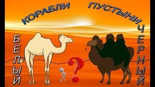 Black Desert online.Темно-коричневый верблюд,как и где получить?