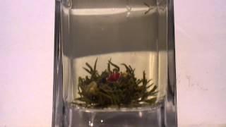 Ceai verde infloritor(Green blooming tea., 2012-04-10T22:20:46.000Z)