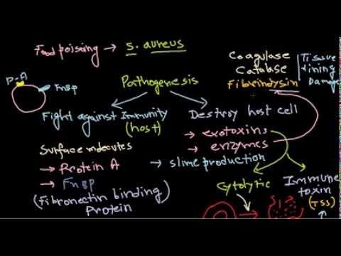 Staphylococcus pathogenesis