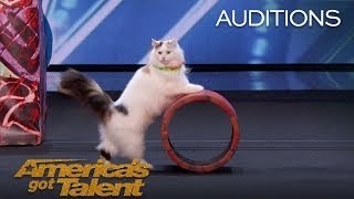 the savitsky cats super trained cats perform exciting routine americas got talent 2018