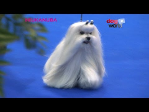 Manchester Dog Show 2017 - Best in Show