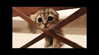 Aww Super Cute ♥ Best Funny Cats Videos #1