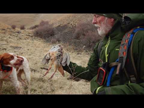 2019 Chukar Hunting