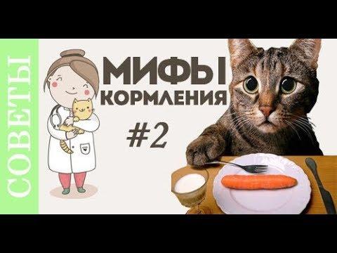 Вопрос: Какой сухой корм можно предложить пожилой кошке с проблемными зубами?