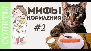 Что вы не знали о кормлении кошки?! Советы ветеринара