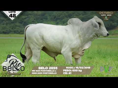 LOTE 48   BELO 2855