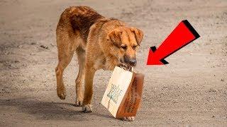 Каждый день эта собака приходила за едой к людям и уносила её в пакете к подземному переходу...