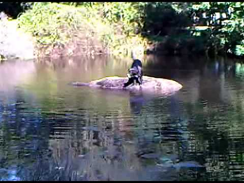 redneck fish finder - youtube, Fish Finder