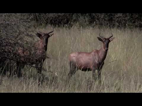 Hunting Red Lechwe South Africa - Mkulu Hunting Safaris