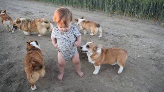 Baby Boy Loves Corgi Puppies || ViralHog