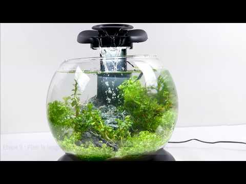 Tetra duo waterfall globe - Jardin aquatique Zen