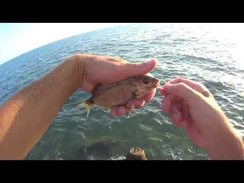 Rockfish 2019 Сочи 26 августа карась Игорь Зинковский