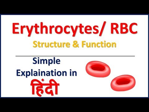 Erythrocytes | RBC | Structure and Function in Hindi | Bhushan Science