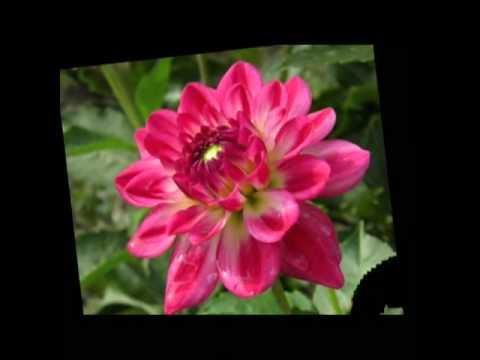 Wszystkie Kwiaty Tego świata - Zespół Relax