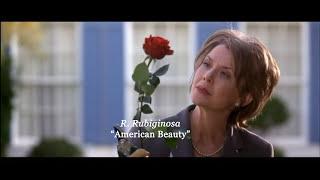 Essential Films: American Beauty (1999)