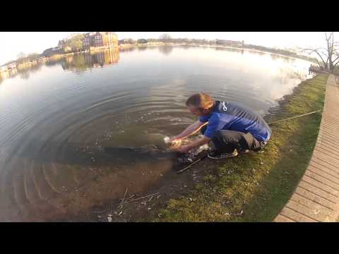 Urban fishing London - Big carp from London parks part 1