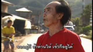 ชาวเขาเผ่าปะหล่อง อ่างขาง Hill tribe in Thailand