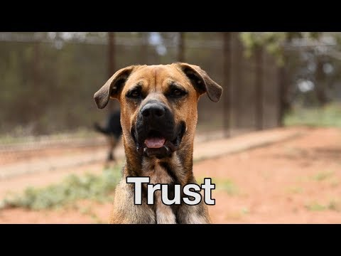 The Love Dogtor Tip#1 - Trust