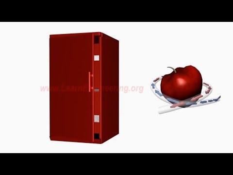 видео: Принцип работы холодильника и холодильный цикл