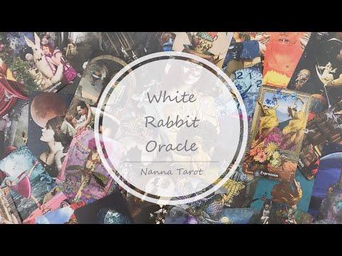 開箱  白兔神諭卡 I  • White Rabbit Oracle I  // Nanna Tarot