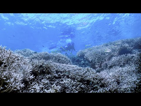 'Chasing Coral' documents destruction of coral reefs