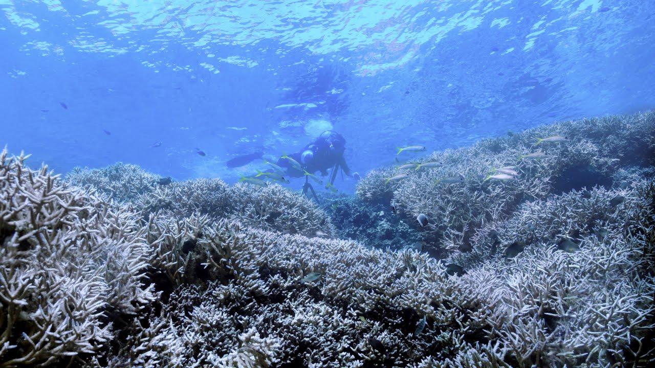 Karang di The Great Barrier Reef, sekarat akibat air laut yang memanas terkait dengan pemanasan Bumi. (gambar dari: https://www.youtube.com/watch?v=8eFTkeUYpfQ)