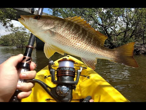 Fishing Shrimp Off The Kayak For Mangrove Snappers