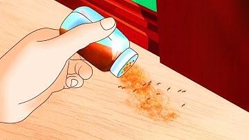 집 벌레 퇴치하는 효과적인 방법 7가지