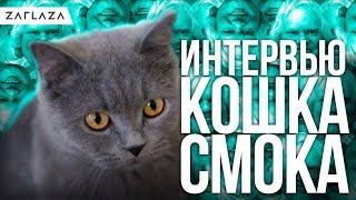 Интервью с кошкой / Вопросы Дудя, Жизнь кошек.