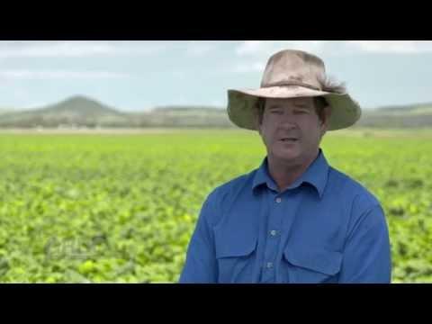GCTV16: Mungbeans - IPM a Grower's Perspective