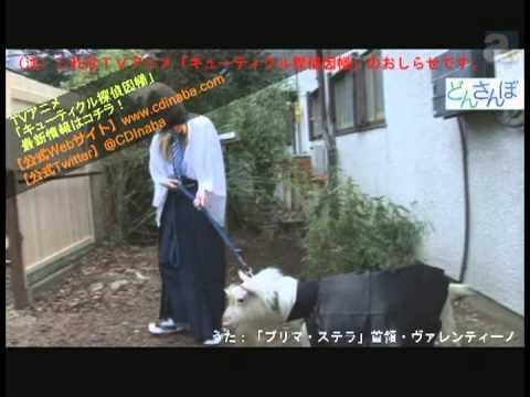 2013年1月より放送開始のTVアニメ「キューティクル探偵因幡」のおしらせ動画。首領・ヴァレンティーノとロレンツォがアジトを飛び出しておさん...
