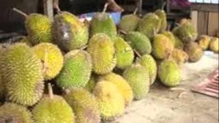 Download Video Lintang Dusunku.wmv MP3 3GP MP4