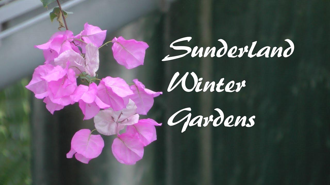 sunderland winter gardens youtube