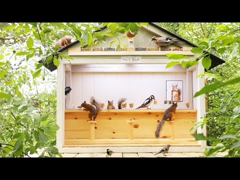 Movie Squirrels Nut Bar - Hang Out With Squirrels And Birds ( 1 Hour, 4K )