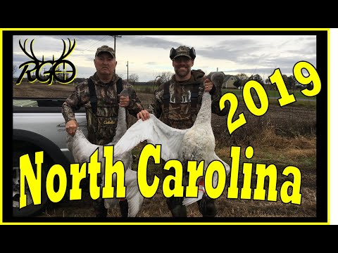 Tundra Swan Down! NC Waterfowl Trip 2019 - RGO Ep 154