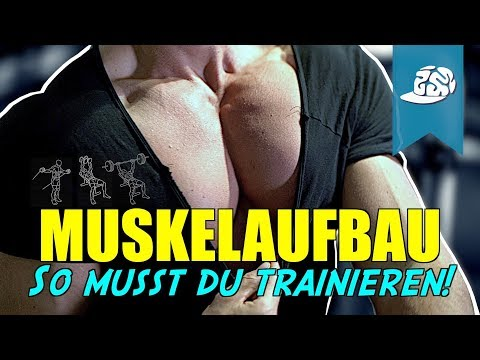 Anleitung für den Muskelaufbau - Holistisches Training