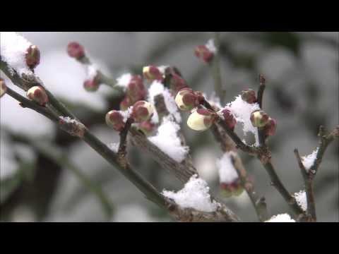 Du lịch mùa đông Nhật Bản