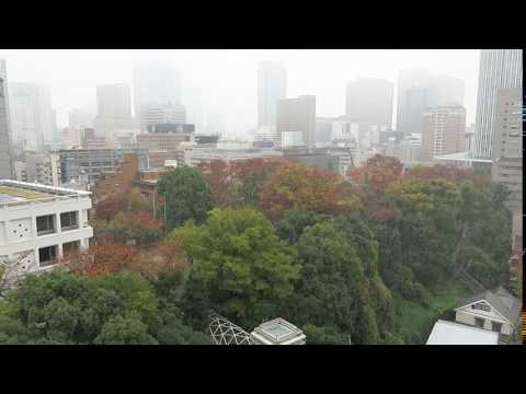 Tokyo records first ever snowfall in November in 54 years