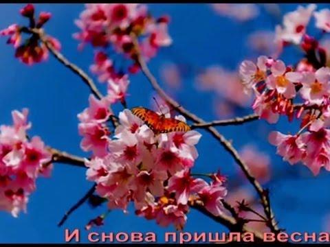 ★ Сакура цветет. ПОТРЯСАЮЩЕ КРАСИВЫЙ РОЛИК ★★★★★