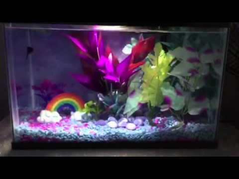 5 5 gallon betta aquarium fish tank youtube for Fish tank youtube