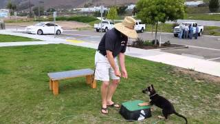 Placeboard For Dog Training | Canine Tutors 408-455-1503