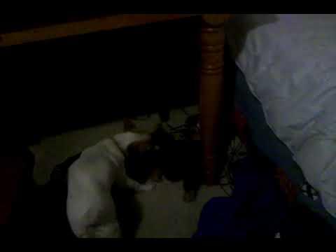 video-2009-11-10-20-08-28