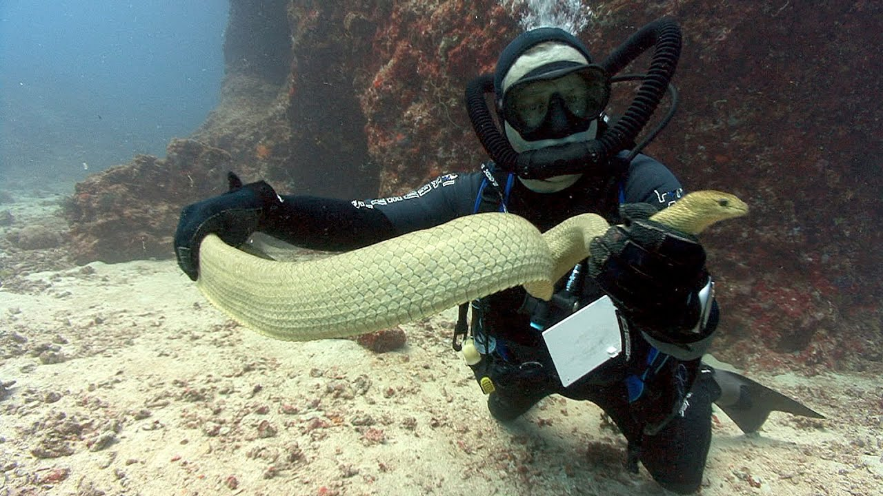Image result for diver and  sea snake