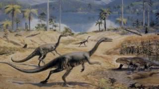 Половой отбор (рассказывает палеонтолог Александр Марков)