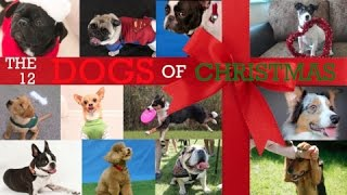 The Twelve Dogs of Christmas Video- singing Pug LOL