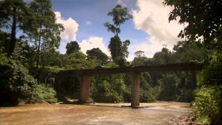 Wallace In Borneo HD