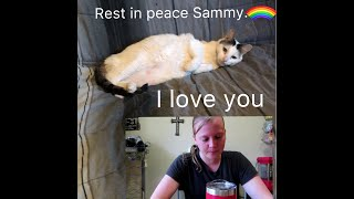 I lost my best friend of 18 years. Rest in peace Sammy.