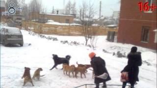 УЖАС- В г. Среднеуральске стаи бродячих собак